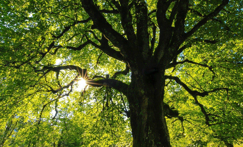 Une grand arbre sous le soleil