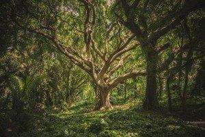 Arbre au milieu de la forêt