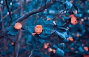 Fleurs orangées sur fond bleuté
